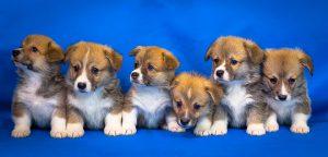 かわいい子犬たち
