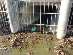 隅除川のゴミが矢田川へ