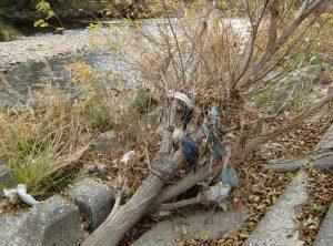 矢田川に咲くビニールの花